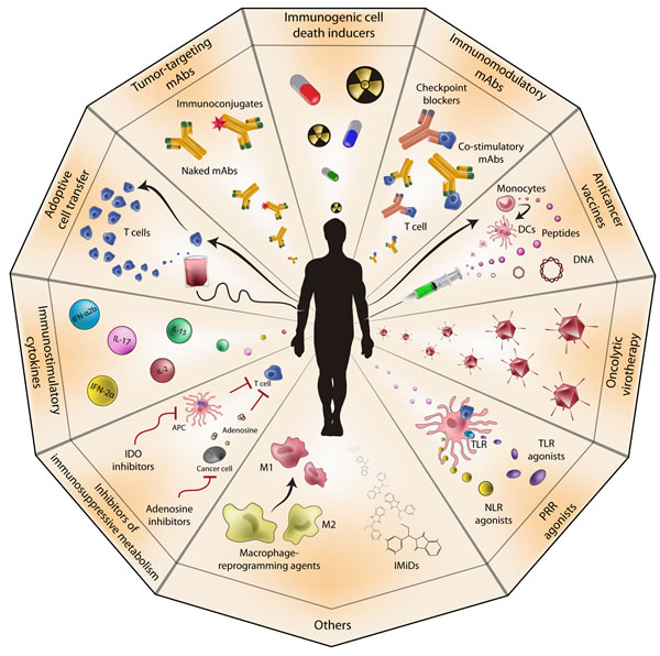Anticancer immunotherapy.