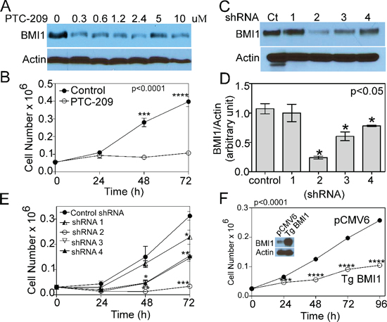 COX4-1 and BMI1 co-expression is required to promote cell proliferation.