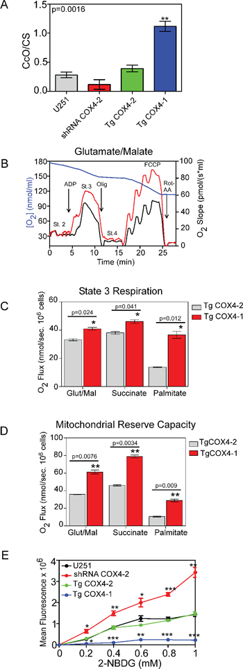 COX4-1 expression induces changes in mitochondrial function.