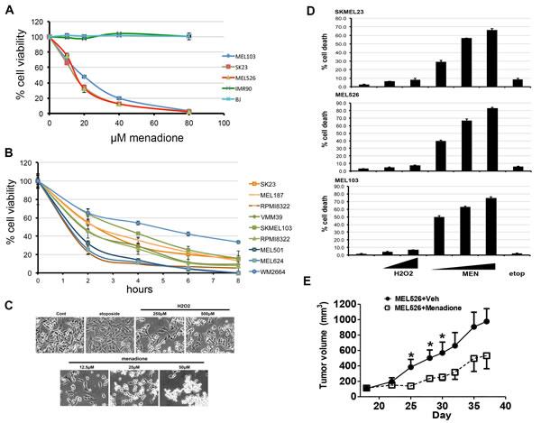 Menadione causes rapid cell death in melanoma cells.