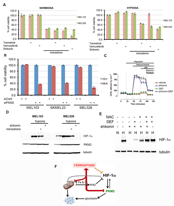 Activation of ferroxitosis involves concurrent inhibition of oxidative phosphorylation and PKM2-dependent glycolysis in melanoma.