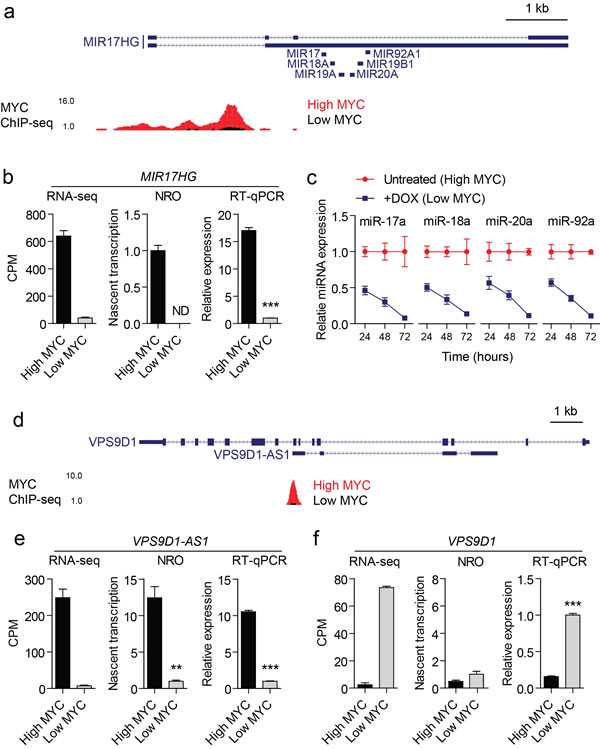 Validation data for two representative MYC-regulated lncRNAs.