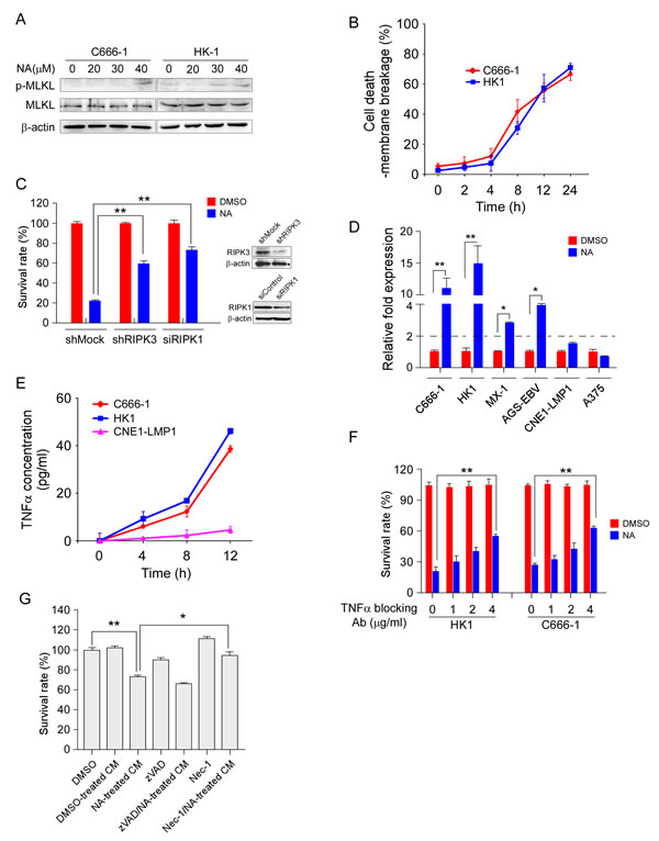 NA promotes autocrine production of TNFα and is required for necroptosis.