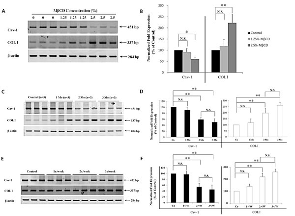 MβCD-induced COL I expression is dependent partly on injection-dose, injection-duration, and injection-frequency in the skin of hairless mice.