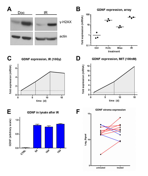 DNA damage induces GDNF expression in human prostate fibroblasts.