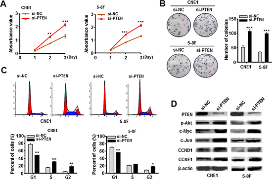 Knockdown of PTEN mimicked the EBV-miR-BART7-3p-induced phenotype in NPC cells.