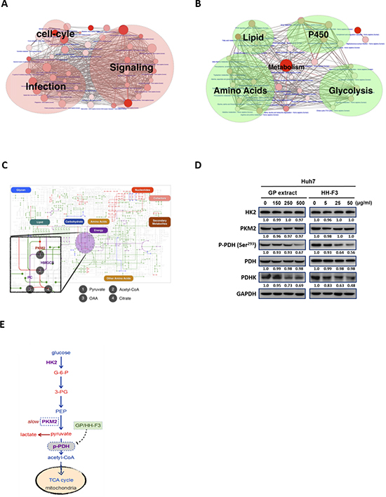 Pathway analysis of up- and down-regulated genes in hepatocellular carcinoma.