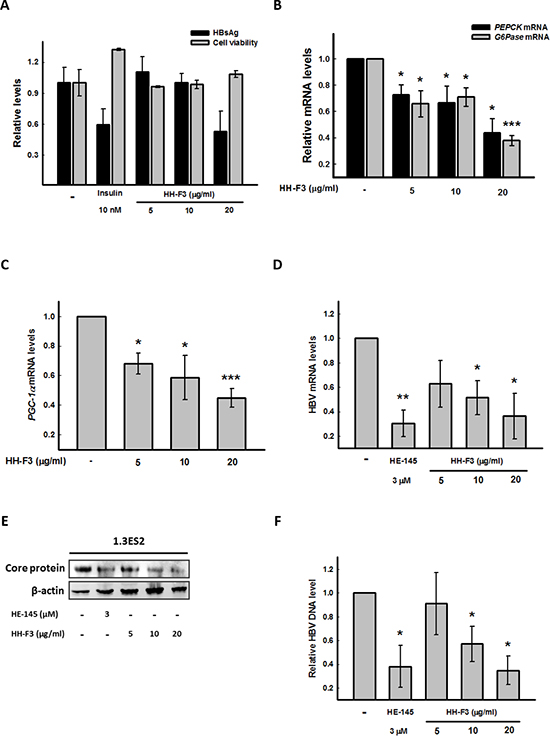 HH-F3 suppresses HBsAg, gluconeogenic enzyme gene expression, and the HBV DNA level in Hep3B/T2 and 1.3ES2 cells.