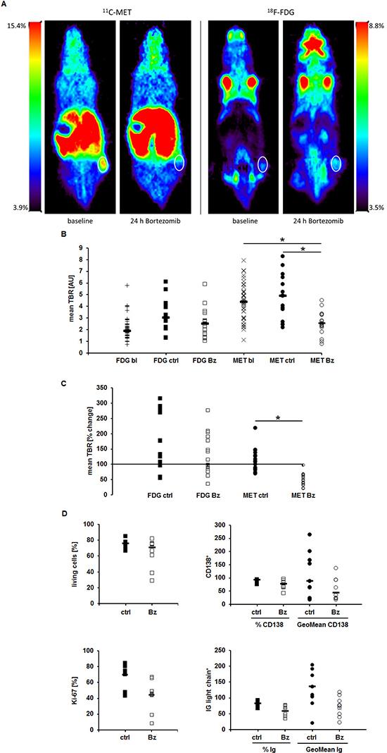 MET-PET reveals very early treatment response in vivo.