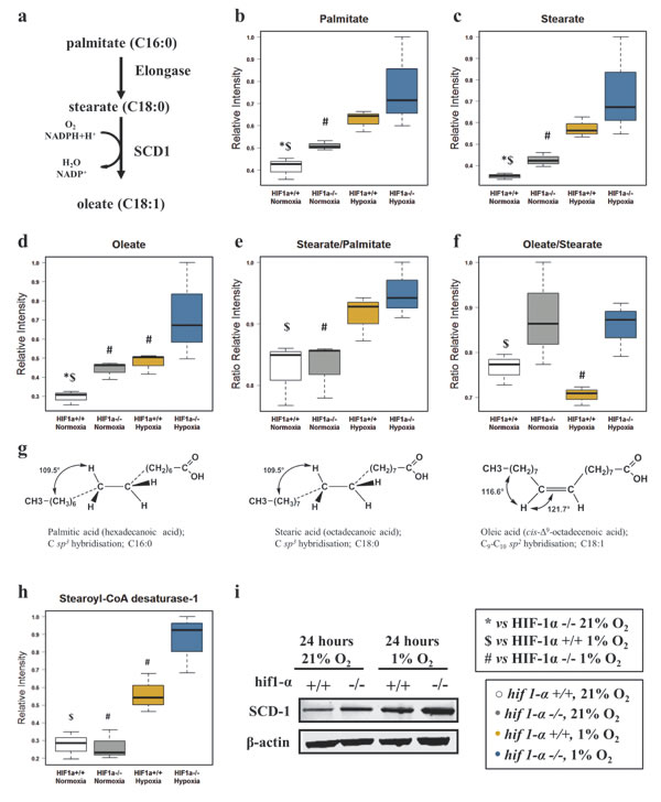 Fatty acid elongation and desaturation in HCT116 colorectal cancer cells in hypoxia.