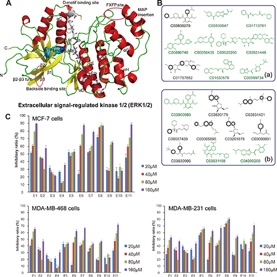 Molecular modeling, docking and anti-proliferative screening of candidate small-molecule compounds targeting ERK1/2.