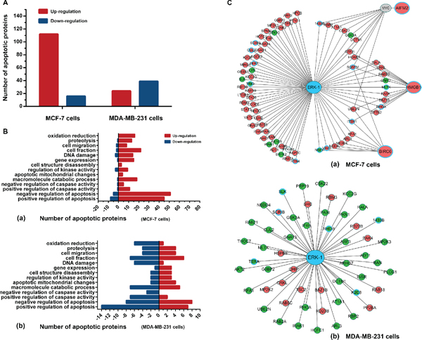 Proteomics analyses of BL-EI001-induced apoptosis in breast cancer cells.