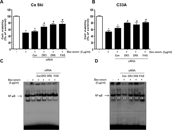 Effect of siRNA of DR3, DR6 and FAS on the BV induced cancer cell growth inhibition, and NF-κB activity in cervical cancer cells.