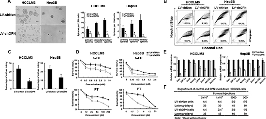 OPN knockdown reduced stem and progenitor characteristics of tumor cells.