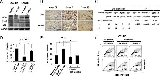OPN signaling is mediated through HIF-1α-BMI1.