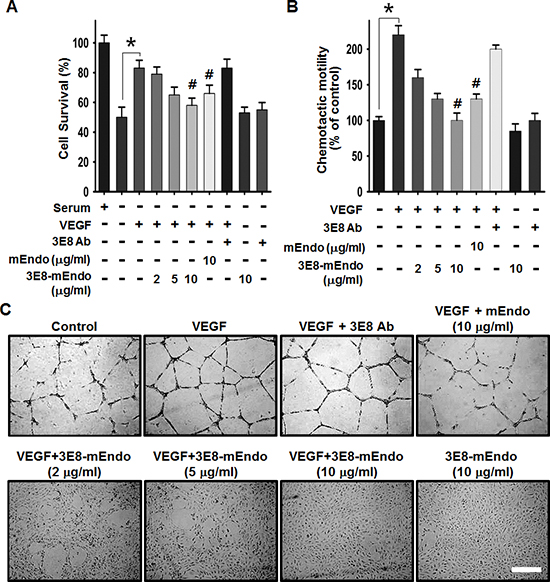 The effects of the 3E8-mEndo fusion protein on VEGF-induced endothelial cell proliferation, migration, and capillary-like tube formation.