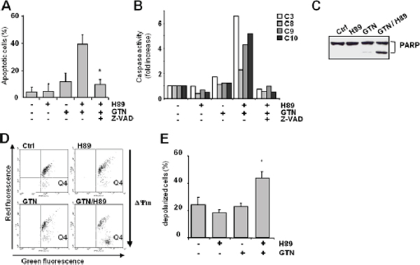 Characterization of GTN/H89-induced colon cancer cell apoptosis.