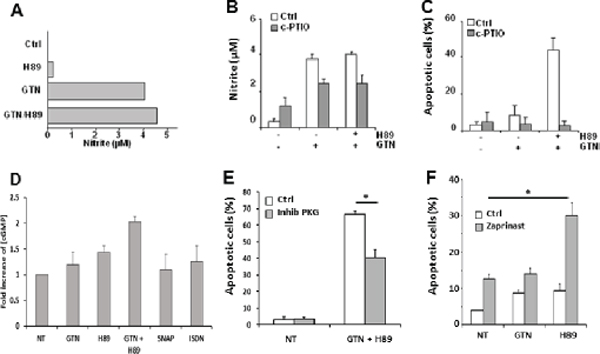 NO is involved in GTN/H89-induced apoptosis.