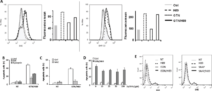 ROS is involved in GTN/H89-induced apoptosis.