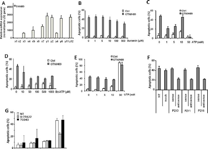 Purinergic receptors participate in GTN/H89-induced apoptosis.
