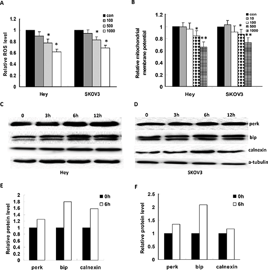 JQ1 induced cellular stress in ovarian cancer cells.