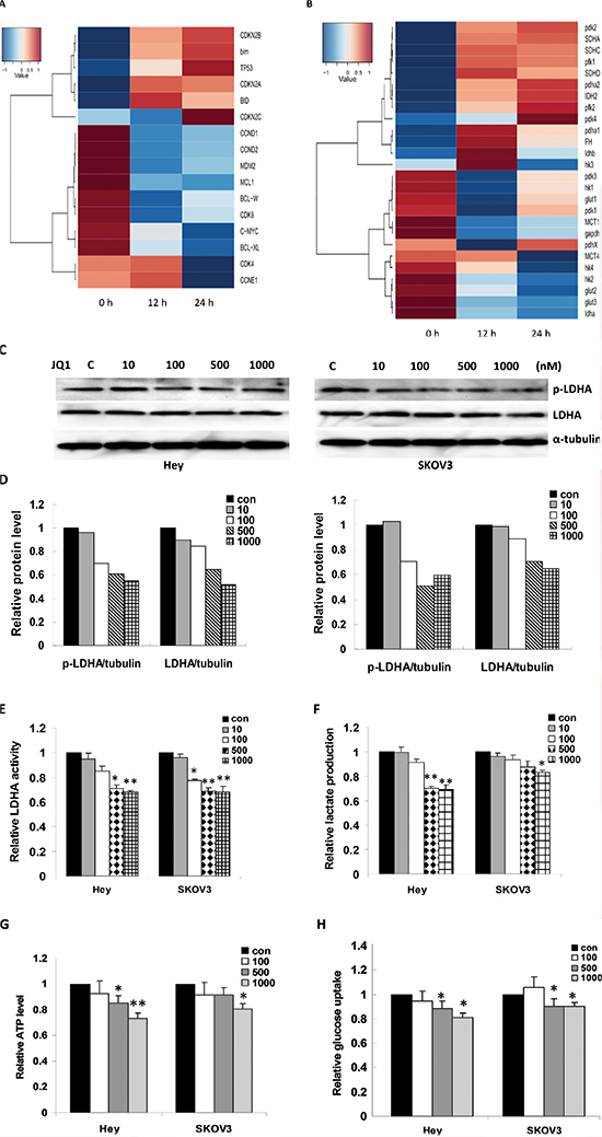 JQ1 induced transcriptomic changes in ovarian cancer cells.