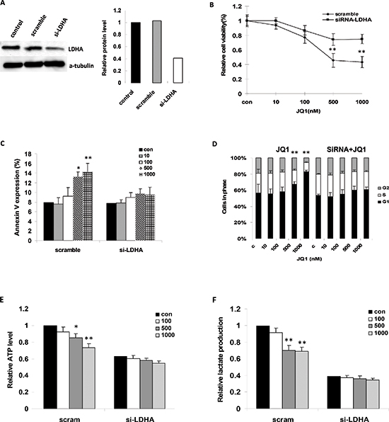 JQ1 suppressed cell growth through the downregulation of LDHA.