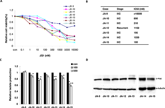 JQ1 inhibited cellular proliferation and reduced lactate production in primary cultures of human ovarian cancer cells.