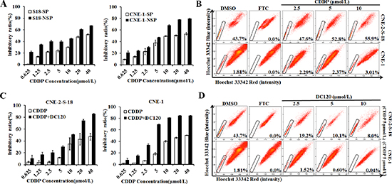 Treatment of NPC cells in combination with DC120 and CDDP in vitro.