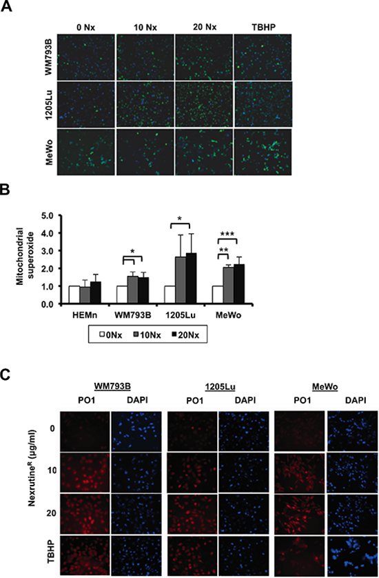 NexrutineR modulates total and mitochondrial ROS in melanoma cells.