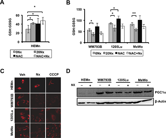 NexrutineR induces oxidative stress selectively in melanoma cells.