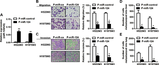 miR-124 inhibits metastases of NSCLC cells.