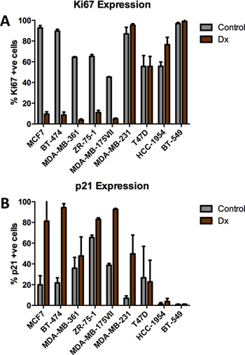Effects of chemotherapy on Ki67 and p21 expression in breast tumor cell lines.