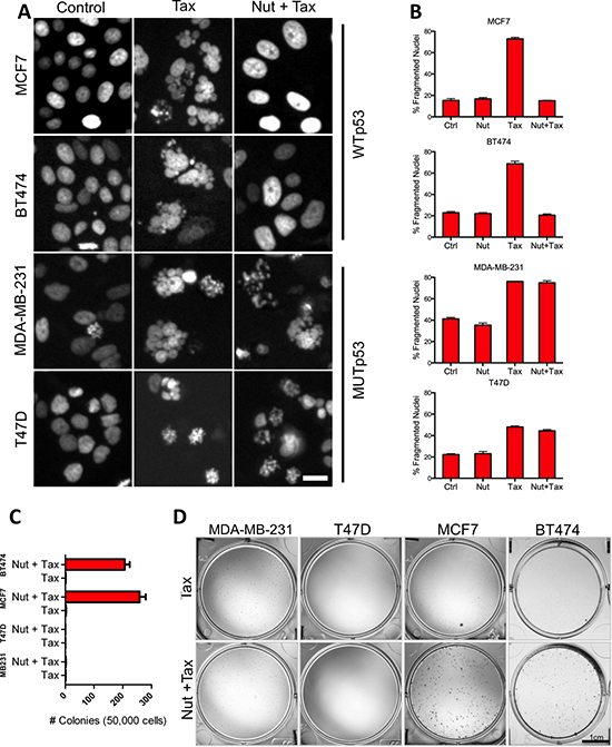 Activation of functional p53 signaling confers chemotherapy resistance to breast tumor cells.