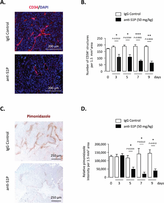 Effect of S1P neutralization on tumor vasculature and hypoxia in PC-3 tumor-bearing mice.