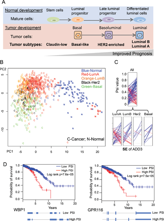 Using cancer-specific AS events to separate breast cancer subtypes.