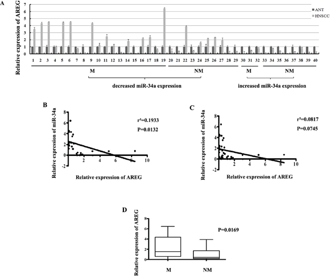 (A) The relative expression of AREG mRNA in NHSCC tumors and the adjacent normal epithelial tissues.