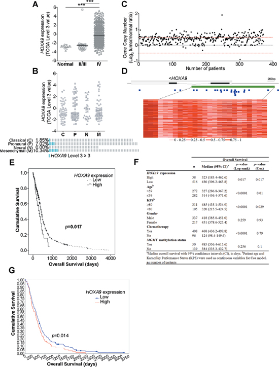 HOXA9 expression is associated with WHO glioma grade and is an independent prognostic factor in glioblastoma patients.