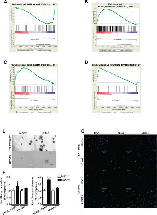HOXA9 transcriptomes are associated with cancer stem cell features.