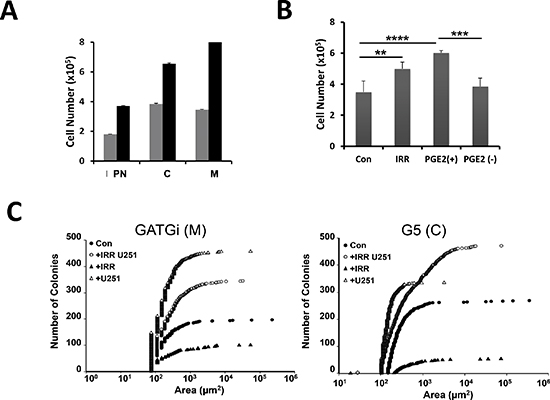 Effect of irradiation on GBM morphology and numbers in vitro; expression of PGE2 receptors in the primary cultures.