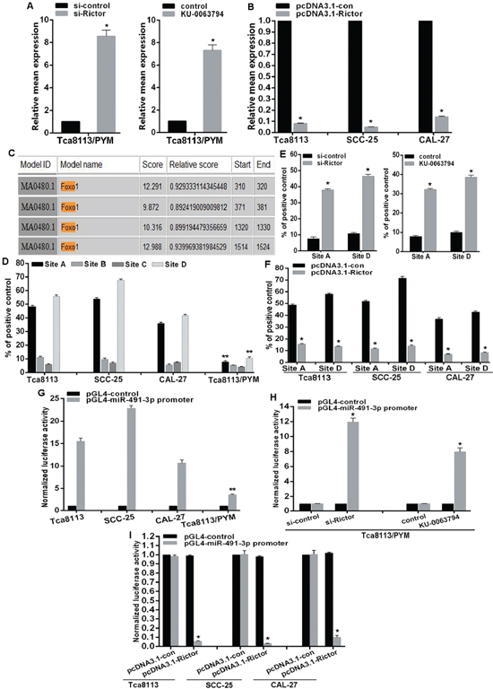 mTORC2 inhibits miR-491-3p expression via modulation of FOXO1 activation.