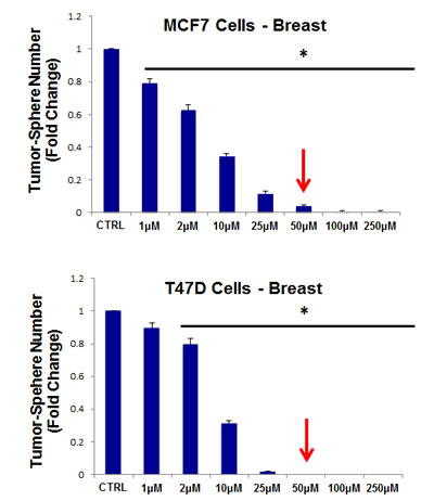 Doxycycline dose-dependently inhibits tumor-sphere formation in MCF7 and T47D cells, two commonly used ER(+) breast cancer cell lines.
