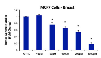 Chloramphenicol dose-dependently inhibits tumor-sphere formation in MCF7 cells.