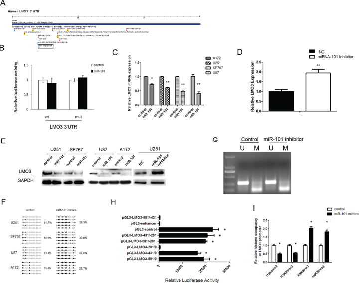 LMO3 is an epigenetic target gene of miR-101.