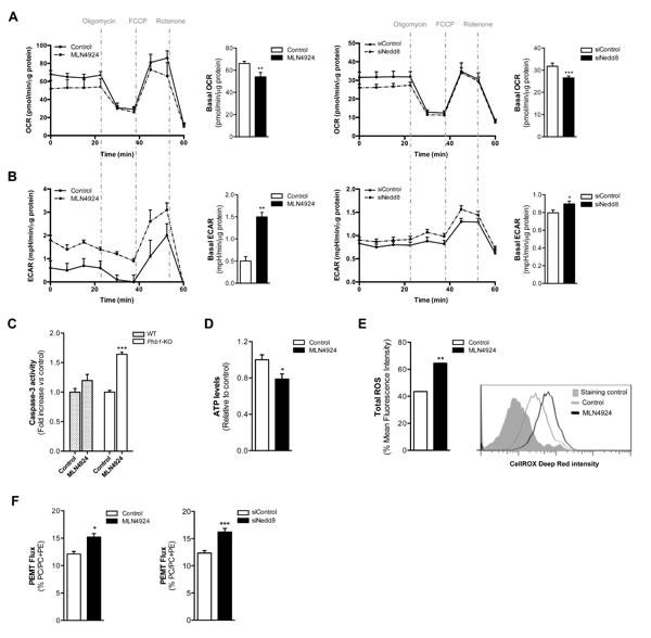 Oxidative Phosphorylation and Glycolysis are dependent on neddylation activity.