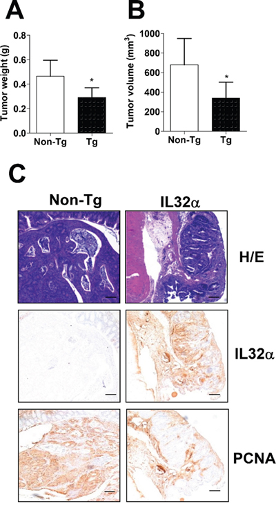Inhibition of cancer development in IL-32α Tg mice.