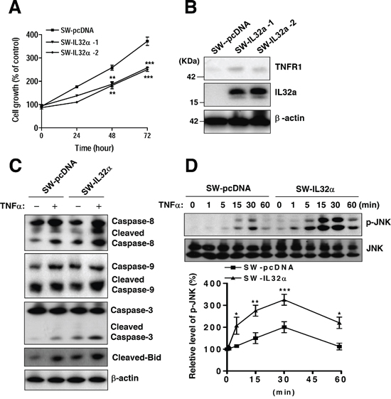 Effects of stable expression of IL-32α in SW620 cells on colon cancer cell growth and apoptotic signaling.