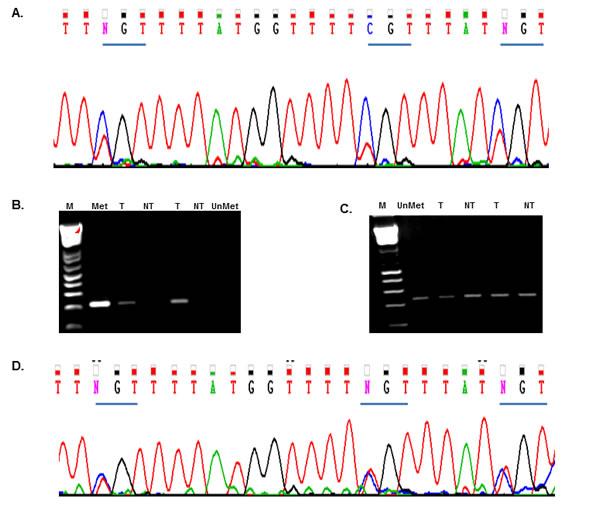 Rad51C Promoter methylation analysis.