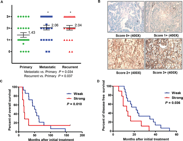 Expression of CD44 and clinical significance in primary, metastatic, and recurrent ovarian cancer.