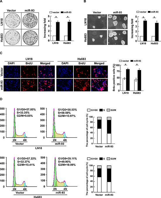 miR-93 promotes cell proliferation and cell-cycle progression in glioma cells.